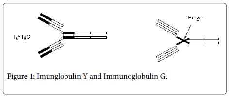 clinical-microbiology-Imunglobulin-Immunoglobulin