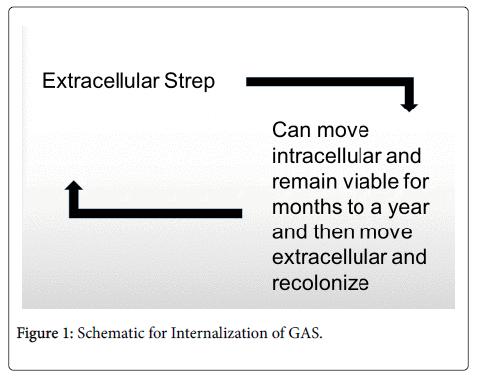 clinical-microbiology-Internalization-GAS