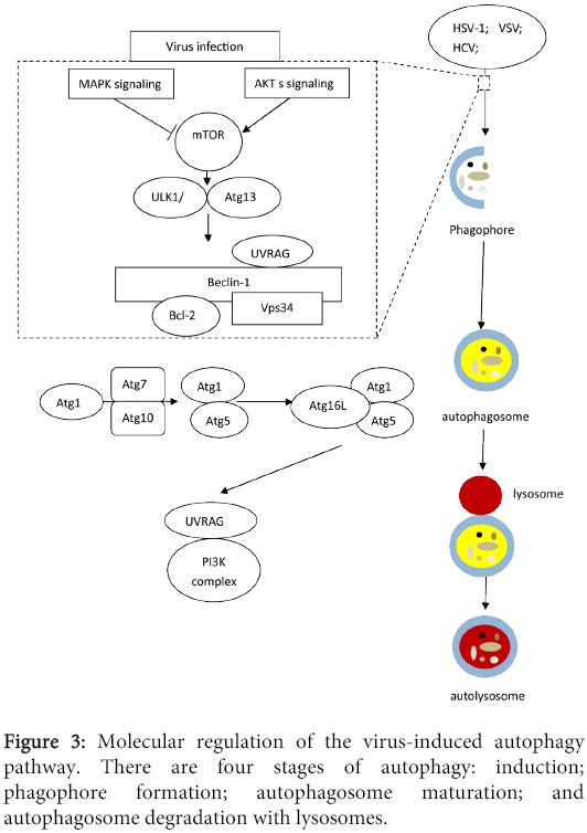 clinical-microbiology-Molecular-regulation-virus
