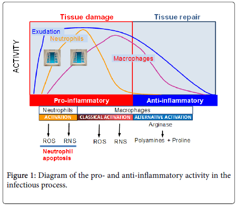 clinical-microbiology-anti-inflammatory-activity