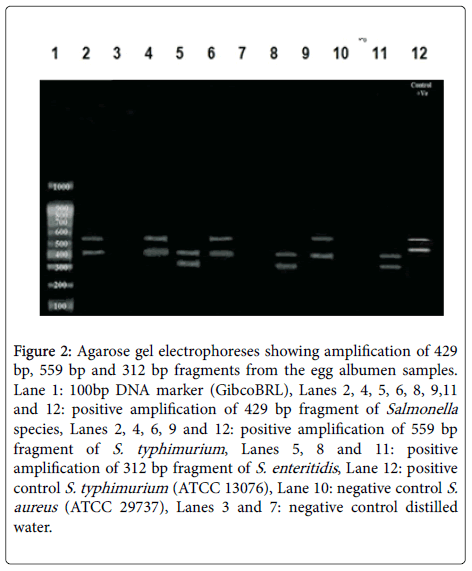 clinical-microbiology-egg-albumen