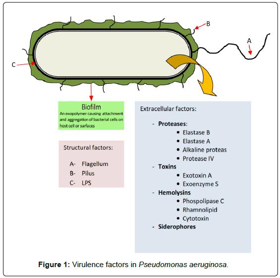 clinical-microbiology-factors-Virulence