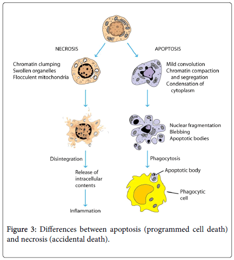 clinical-microbiology-programmed-cell-death