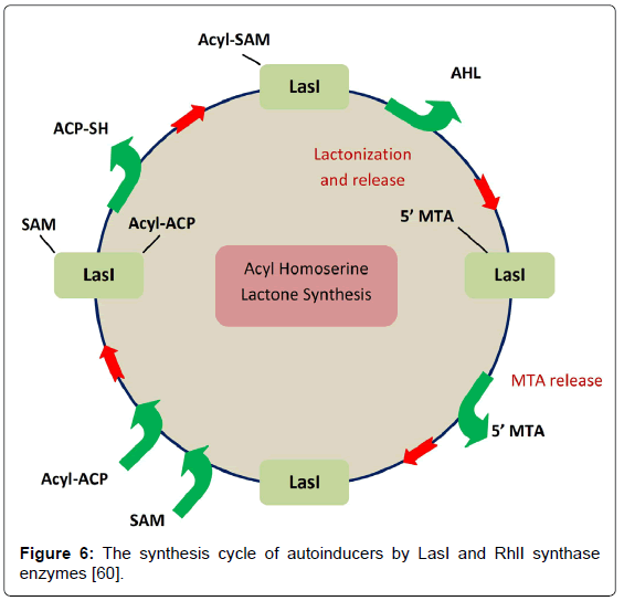 clinical-microbiology-synthesis-cycle