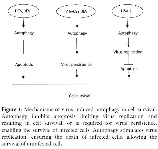 clinical-microbiology-virus-induced-autophagy