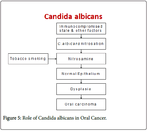 clinical-pathology-EBV-Candida-albicans