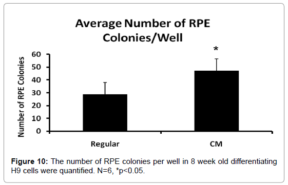 clinical-pathology-RPE-colonies