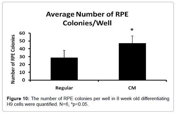 clinical-pathology-RPE-colonies