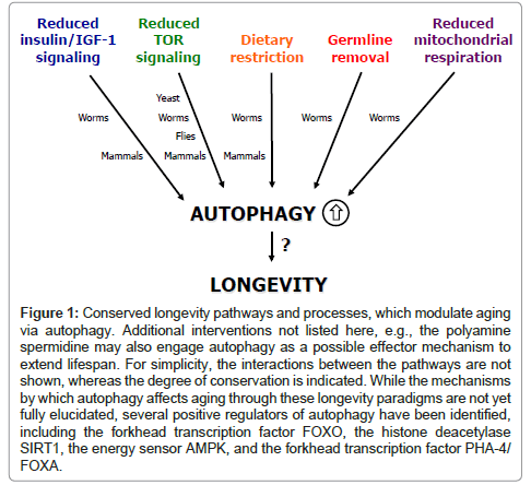 clinical-pathology-engage-autophagy