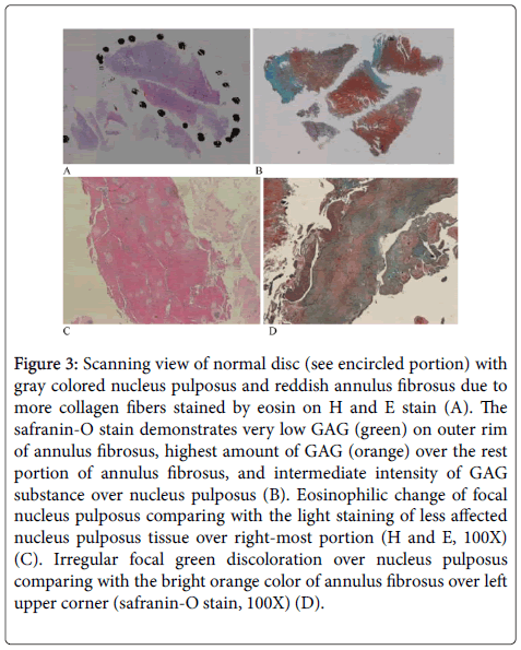 clinical-pathology-gray-colored-nucleus