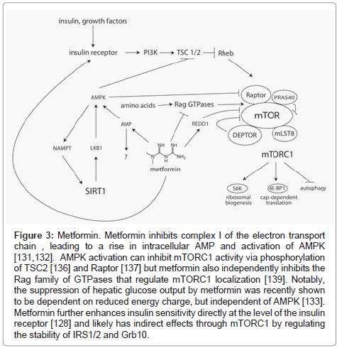 clinical-pathology-phosphorylation