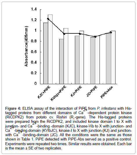 clinical-pathology-protein-kinase