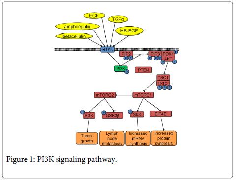 clinical-pathology-signaling-pathway