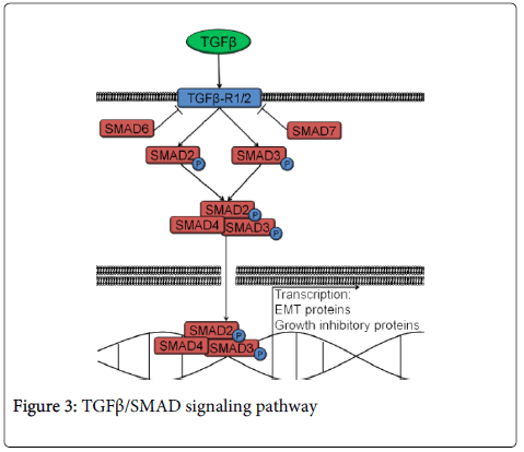 clinical-pathology-signaling-pathway