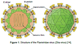 clinical-pharmacology-biopharmaceutics-Structure-Flaviviridae-virus