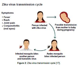 clinical-pharmacology-biopharmaceutics-Zikavirus-transmission-cycle