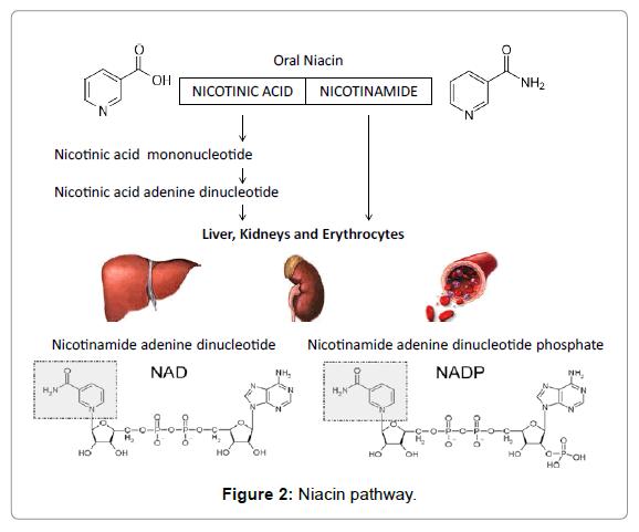 Niacin to pass a urine test
