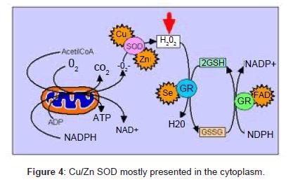 clinical-toxicology-SOD-cytoplasm