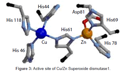Copper and Zinc, Biological Role and Significance of Copper