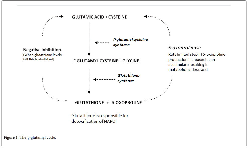 clinical-toxicology-glutamyl-cycle