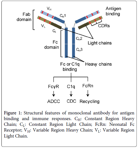 clinical-toxicology-monoclonal-antibody