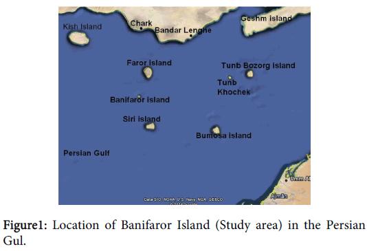 coastal-development-banifaror-island-persian
