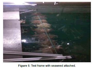coastal-development-seaweed-attached