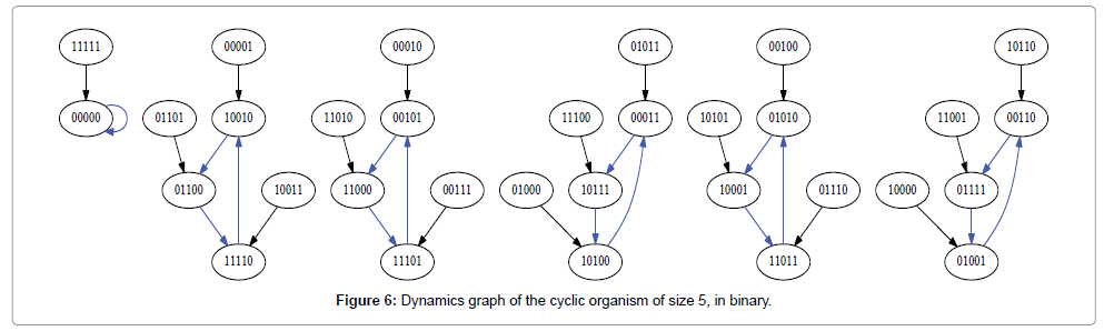 computer-science-systems-biology-Dynamics-graph