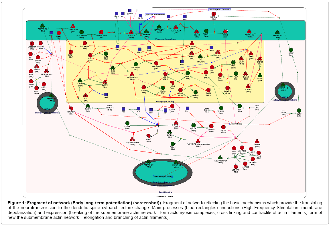 computer-science-systems-biology-Fragment-network
