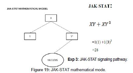 computer-science-systems-biology-JAK-STAT