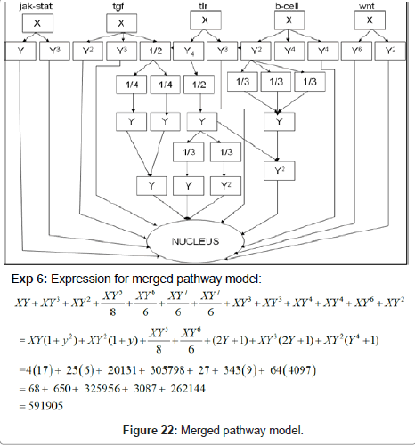 computer-science-systems-biology-Merged-pathway