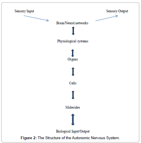 The framework of a mathematical model of the autonomic nervous computer science systems biology nervous system ccuart Choice Image