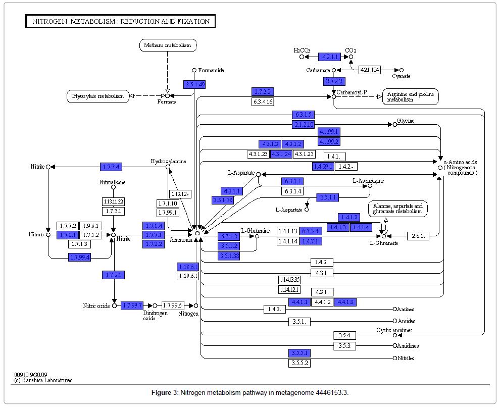 computer-science-systems-biology-Nitrogen-metabolism