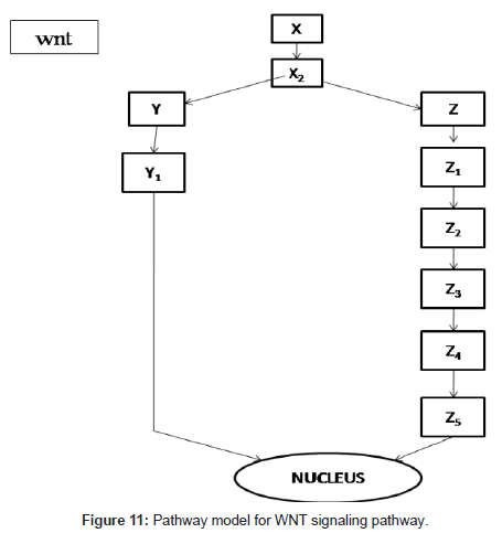 computer-science-systems-biology-Pathway-model