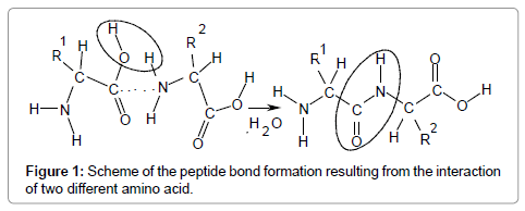 computer-science-systems-biology-Scheme-peptide-bond
