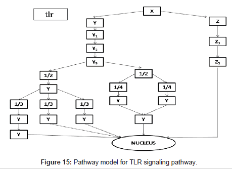 computer-science-systems-biology-TLR-signaling-pathway