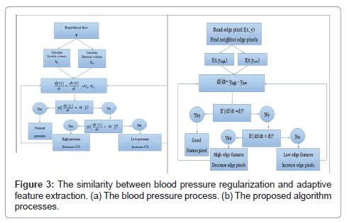 computer-science-systems-biology-blood-pressure-regularization