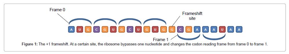 Circular Code Signal in Frameshift Genes | OMICS International