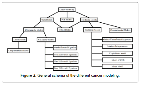 computer-science-systems-biology-cancer-modeling