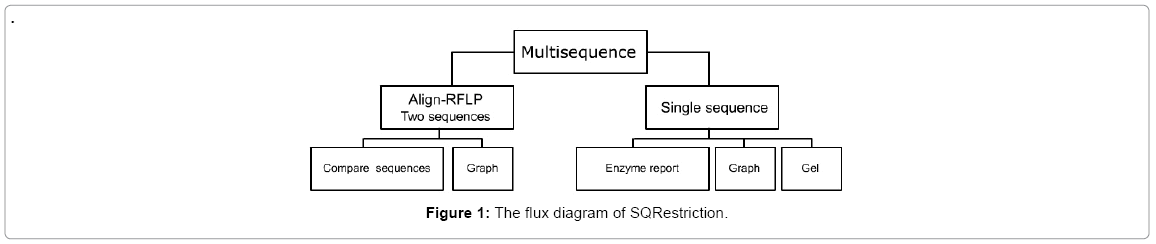 computer-science-systems-biology-flux-diagram