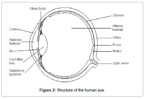 computer-science-systems-biology-human-eye