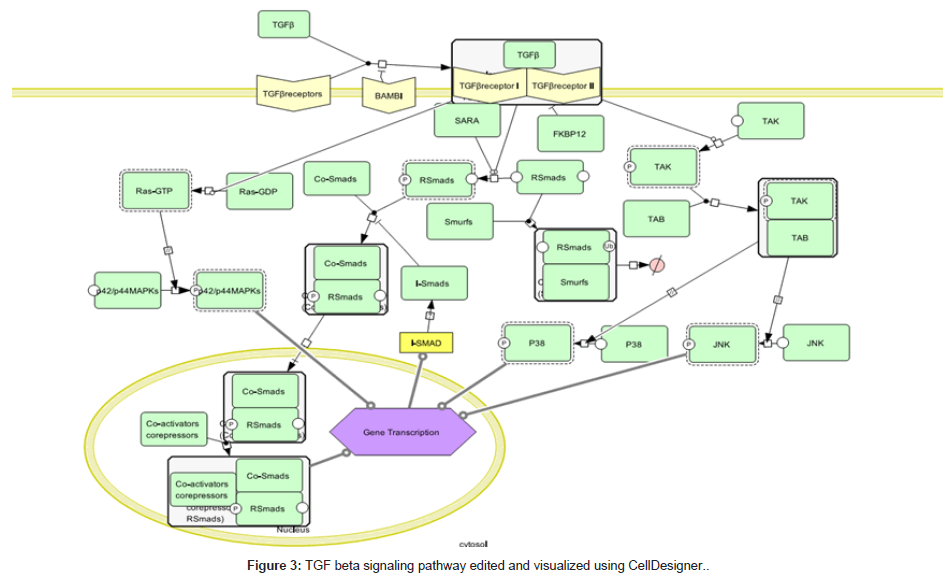 computer-science-systems-biology-signaling-pathway