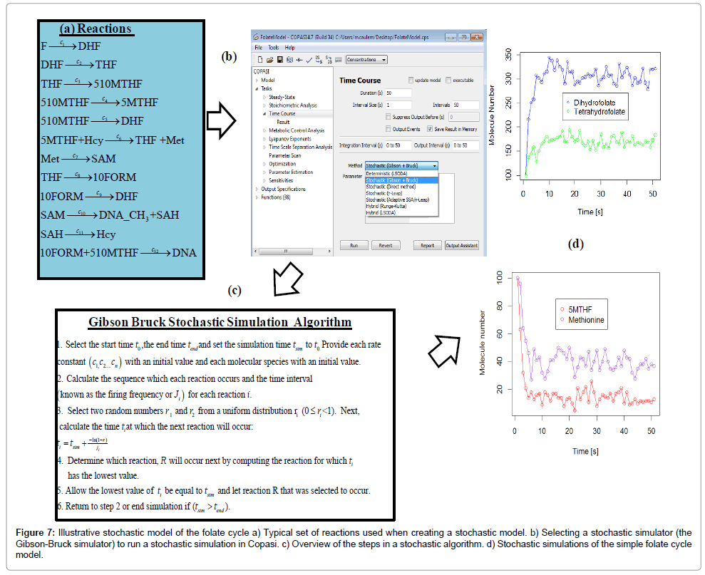 computer-science-systems-biology-stochastic-model