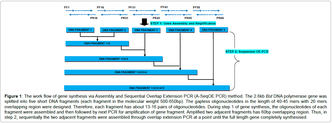current-synthetic-systems-biology-Assembly-Sequential-Overlap