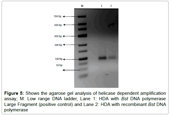 current-synthetic-systems-biology-agarose-helicase-amplification