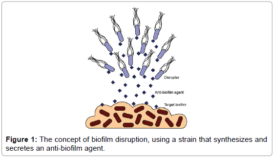 current-synthetic-systems-biology-biofilm-disruption-strain