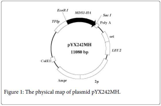 current-synthetic-systems-biology-physical-map-plasmid