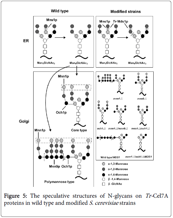 current-synthetic-systems-biology-speculative-structures-glycans