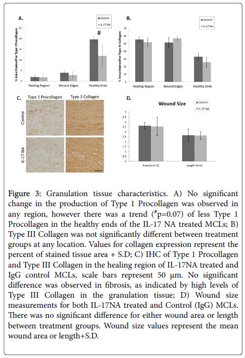 cytokine-biology-Granulation-tissue