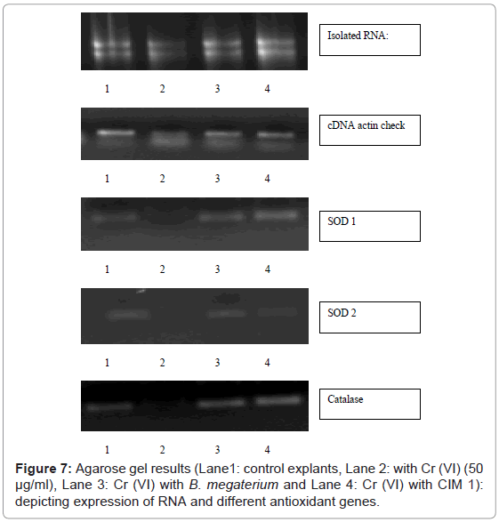 cytology-histology-agarose-gel-results